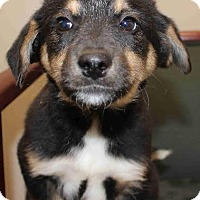Adopt A Pet :: Petra - Greeneville, TN