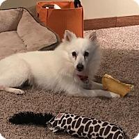 Adopt A Pet :: Finn - Mattoon, IL