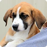 Adopt A Pet :: Henrietta - Glastonbury, CT