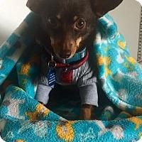 Adopt A Pet :: Peso - Chandler, AZ