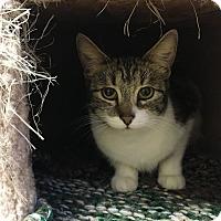 Adopt A Pet :: Jasmine - Fountain Hills, AZ