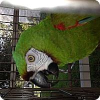 Adopt A Pet :: Sabrina - Punta Gorda, FL