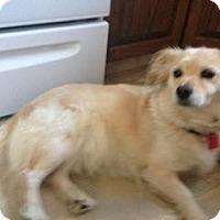 Adopt A Pet :: Julie - Saskatoon, SK