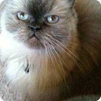 Adopt A Pet :: Lucian - Beverly Hills, CA