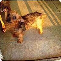 Adopt A Pet :: Sassy - Irvington, KY