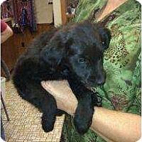 Adopt A Pet :: Hunter - Denver, CO