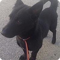 Adopt A Pet :: Bruizer - Oceanside, CA