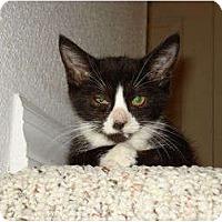Adopt A Pet :: Dot - Orlando, FL