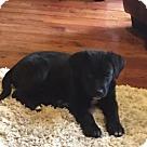 Adopt A Pet :: Cruz
