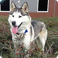 Adopt A Pet :: Mars - Redondo Beach, CA