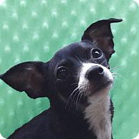 Adopt A Pet :: Tater - San Francisco, CA