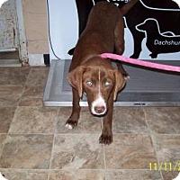 Adopt A Pet :: Dakotah - Lewisburg, TN