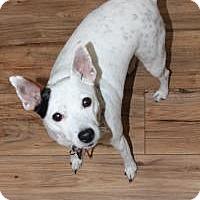Adopt A Pet :: Dots - Howell, MI