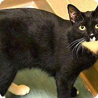 Adopt A Pet :: IDRIS - Pittsburgh, PA
