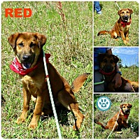 Adopt A Pet :: Red - Kimberton, PA