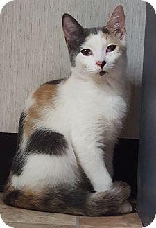 Domestic Shorthair Kitten for adoption in Savannah, Georgia - Winter