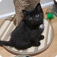 Adopt A Pet :: Ofelia - Richmond Hill, ON