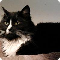 Adopt A Pet :: Empire - Rockville, MD