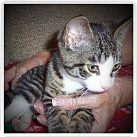 Adopt A Pet :: DELFINA - Medford, WI