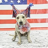 Adopt A Pet :: Chrissy Snow - West Allis, WI