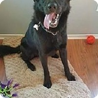 Adopt A Pet :: Jax - Adopted Sept 2016 - Huntsville, ON