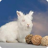 Adopt A Pet :: Analise - Marietta, GA
