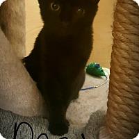 Adopt A Pet :: Dascha - Gainesville, VA