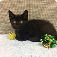 Adopt A Pet :: Jack - Moody, AL