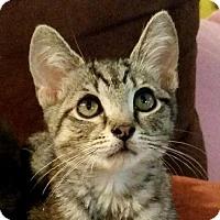 Adopt A Pet :: Robin - Fairfax, VA