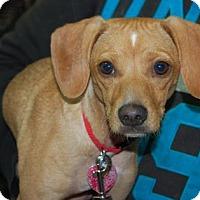 Adopt A Pet :: Jill - Brooklyn, NY