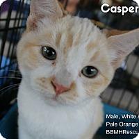 Adopt A Pet :: Casper - Temecula, CA