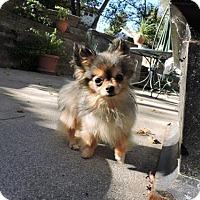 Adopt A Pet :: Koko - Omaha, NE