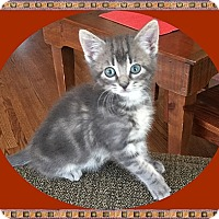 Adopt A Pet :: Harvest - Mt. Prospect, IL
