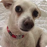Adopt A Pet :: Jax - Culver City, CA