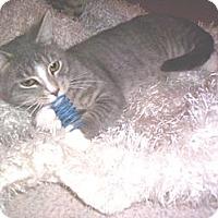 Adopt A Pet :: Smokey - Grand Chain, IL