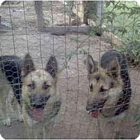 Adopt A Pet :: Sadie & Fiona - Fowler, CA