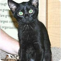 Adopt A Pet :: Ruby - Irvine, CA