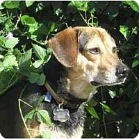 Adopt A Pet :: Davey - Phoenix, AZ