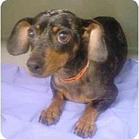 Adopt A Pet :: Sissy - Kingwood, TX