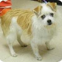 Adopt A Pet :: Kelly - Washington Court House, OH