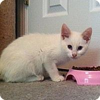 Adopt A Pet :: Prince Harry - Monroe, GA