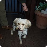 Adopt A Pet :: Karena -LeAnne - Raleigh, NC