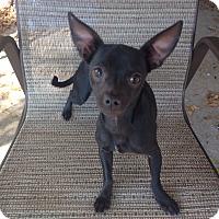 Adopt A Pet :: Bean - Orlando, FL