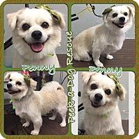 Adopt A Pet :: Penny - South Gate, CA