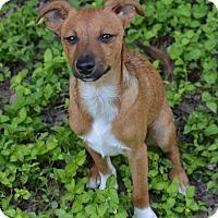 Adopt A Pet :: Bruno - Wimberley, TX