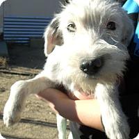 Adopt A Pet :: ELLY - Corona, CA