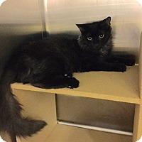 Adopt A Pet :: Stefanie - Colmar, PA