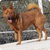 Adopt A Pet :: Greta - Scottsdale, AZ