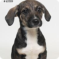 Adopt A Pet :: Millie - Baton Rouge, LA