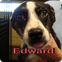 Adopt A Pet :: Edward - Coleman, TX